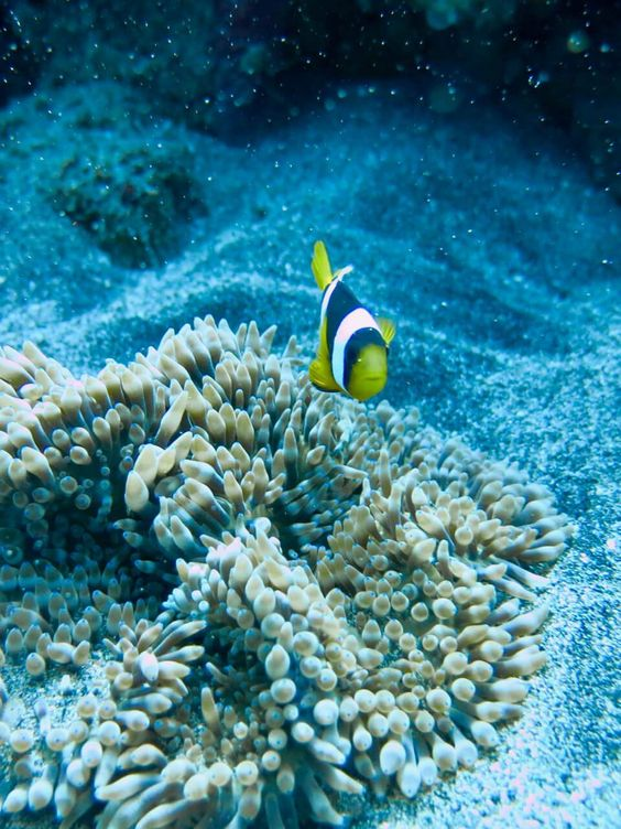 Best Diving in Bali Tips for All