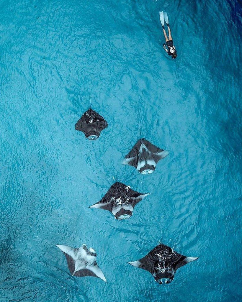 The Wonders of Nusa Penida Diving is Summer Perfect