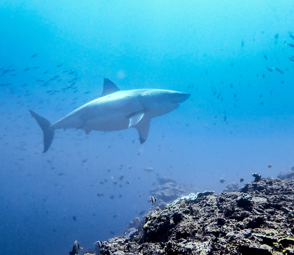 See Which Diving Spots Are Popular in Bali