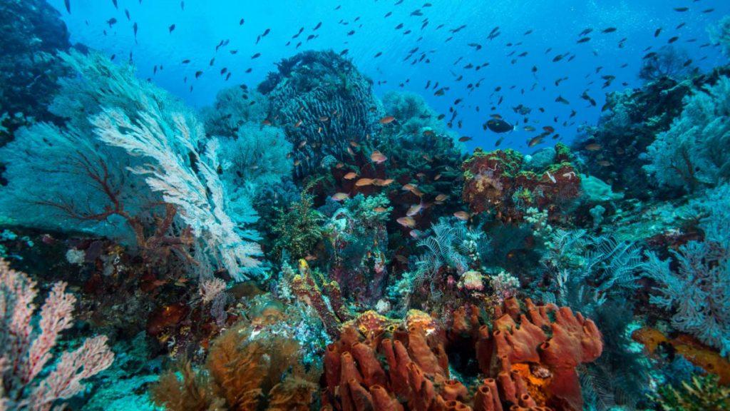 komodo national park underwater