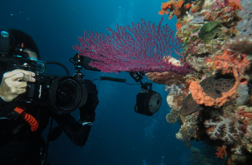 diving komodo island tour