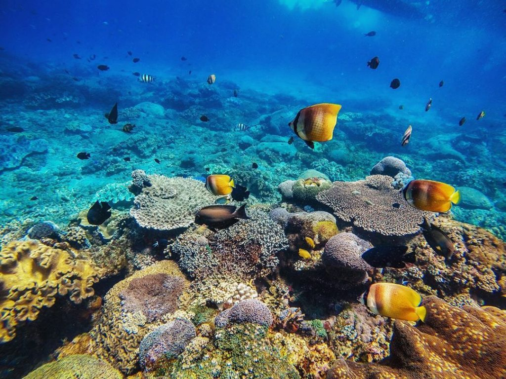 The Wonders of Nusa Penida Diving is Summer Perfect